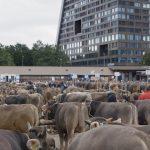 18_DER_AST_Viehmarkt_Zug Kopie